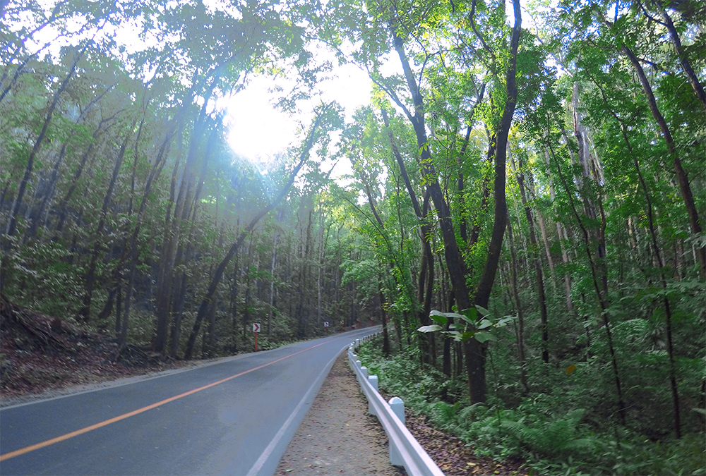 Bilar-man-made-forest-Bohol